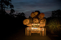 A truck carries logs along a road at night.