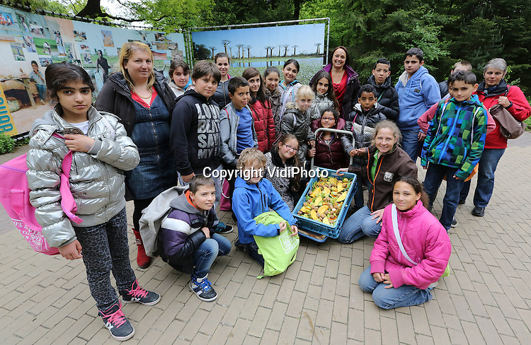 Foto: VidiPhoto<br /> <br /> APELDOORN - Een welkomsfeestje voor de nieuwe bonobo Besede van Apenheul in Apeldoorn donderdag. Leerlingen van de Martin Luther Kingschool in Apeldoorn maakten donderdag samen met verzorgers een gezonde groente- en fruittaart voor het zevenjarige vrouwtje. Besede is naar Apenheul gekomen in het kader van het Europese fokprogramma. Het dierenpark heeft &eacute;&eacute;n van de grootste bonobogroepen van Europa en is de enige dierentuin in Nederland met deze zeldzame dieren.