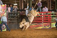 SEBRA - Waynesburg, PA - 4.18.2014 - Bulls & Action