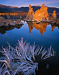Mono Basin Scenic Area, CA: Pastel colors of sunrise on a bleached sagebrush skeleton and distant tufa towers, from the south shore of Mono Lake