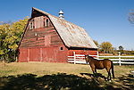 Red barn, corrugated roof, bay horse (Star), and white fence in rural eastern Oklahoma.