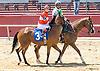 Regal Treasure in The International Ladies FEGENTRI  race at Delaware Park on 6/13/16