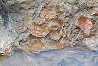 SAVEOCK WATER, CORNWALL, ENGLAND - AUGUST 03: A detail of eggs in Pit 9 on August 3, 2008 in Saveock Water, Cornwall, England. Pit 9 was lined with a feathered swan pelt, with two magpies lying side by side on top of 55 eggs, including 7containing fully formed chicks. Excavated by Jacqui Wood and her team. (Photo by Manuel Cohen)