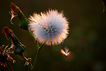 Flowers, Bugs & Birds