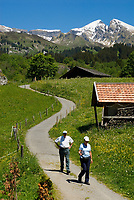 CHE, Schweiz, Kanton Bern, Berner Oberland, Grindelwald: Wanderer oberhalb von Grindelwald vorm Gemsberg | CHE, Switzerland, Bern Canton, Bernese Oberland, Grindelwald: hiking in front of Gemsberg mountain