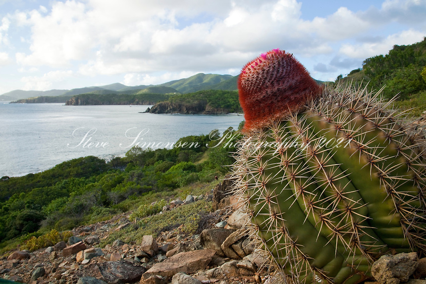 Turks Head Cactus<br />