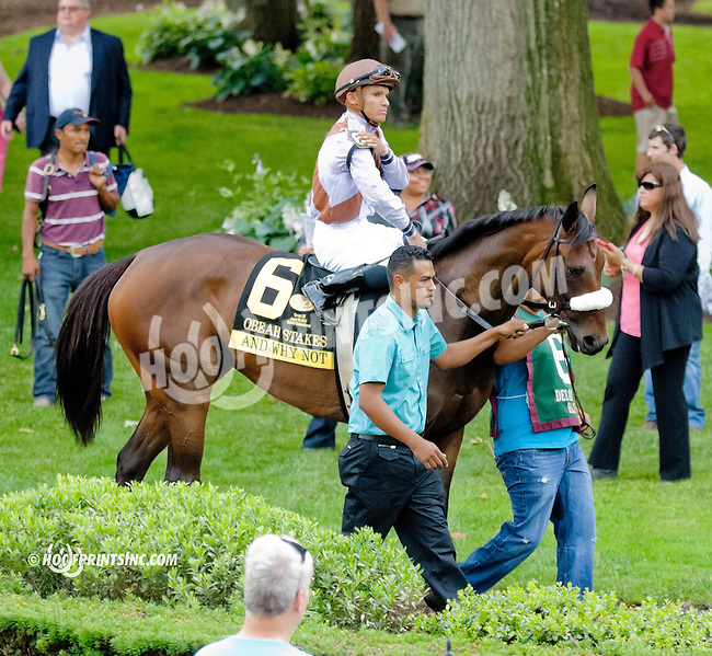 And Why Not before The Obeah Stakes (gr 3) at Delaware Park on 6/15/13