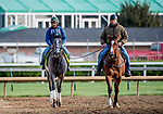 LOUISVILLE, KENTUCKY - APRIL 27: Tacitus, trained by William Mott, exercises in preparation for the Kentucky Derby at Churchill Downs in Louisville, Kentucky on April 27, 2019. Scott Serio/Eclipse Sportswire/CSM