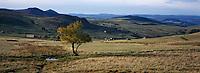 Europe/France/Auvergne/43/Haute-Loire/Env. Les Estables: Vaches en pâturage et le massif du Mézenc (1754 mètres)