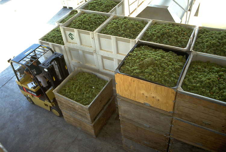 Bins of newly harvested grapes ready to load in the crusher