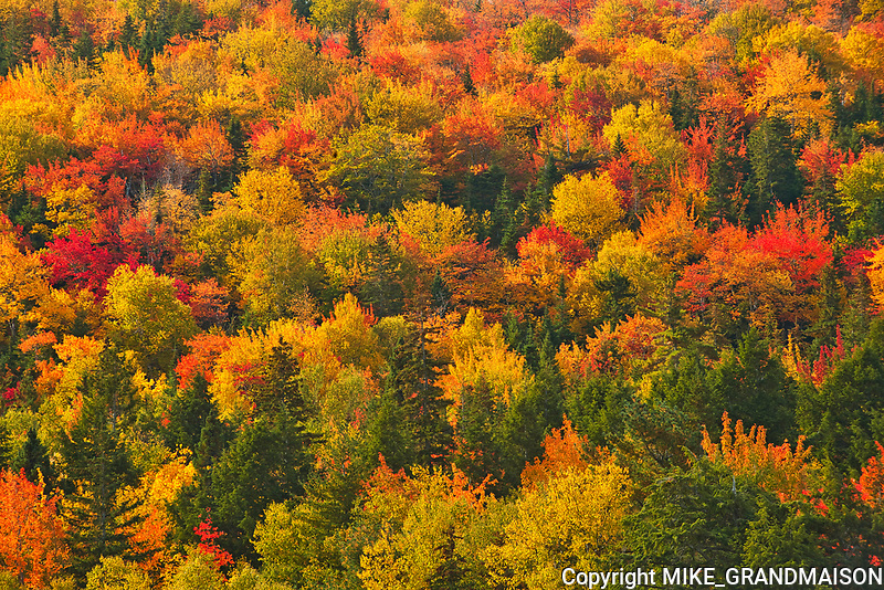 Acadian forest in autumn foliage <br />Indian Brook<br />Nova Scotia<br />Canada