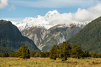 Farmland under Southern Alps at Fox Glacier with Mount Tasman in view, Westland Tai Poutini National Park, UNESCO World Heritage Area, West Coast, New Zealand, NZ