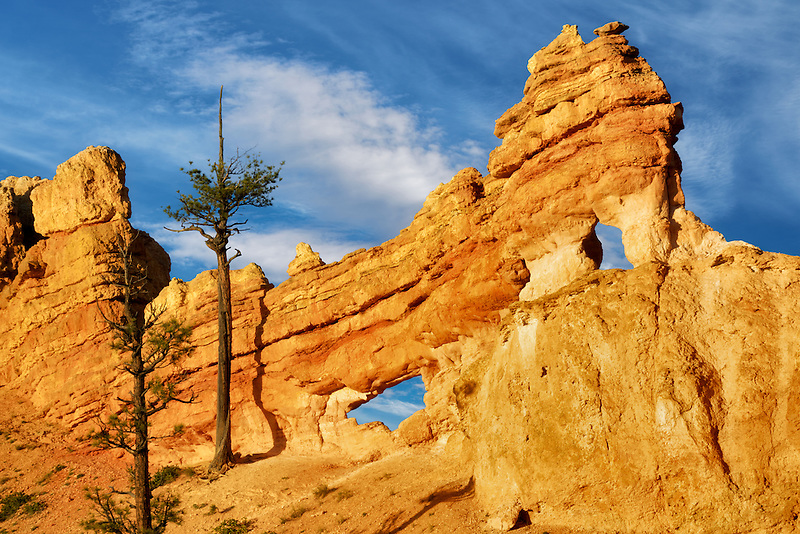 Rock Arches with trees. Bryce National Park, Utah