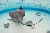 TR6277-D. Southern Stingrays (Dasyatis americana) interacting with woman (model released) at world famous Stingray City. These rays grow to 6 feet wide, females are larger than males. They feed on fish, crabs, clams, shrimp, and worms. Grand Cayman, Cayman Islands, Caribbean Sea.<br /> Photo Copyright &copy; Brandon Cole. All rights reserved worldwide.  www.brandoncole.com