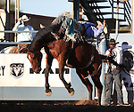 Jerad Schlegel competes in the bareback bronc riding event at the Reno Rodeo in Reno, Nev., on Thursday, June 27, 2013.<br /> Photo by Cathleen Allison