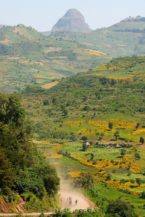 GONDAR/ETHIOPIA..On the road from Gondar to Bahar Dar..Village surrounded by yellow Meskal flowers..(Photo by Heimo Aga)