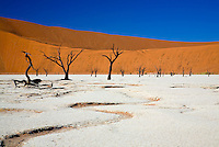 The ancient dead trees at Deadvlei, Sossusvlei, Namib Naukluft National Park, Namibia,