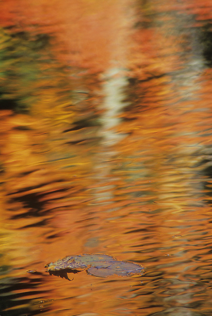 Fall colors reflect on the water of a shaded cove of lily pads on Council Lake in Hiawatha National Forest, Alger County, Michigan