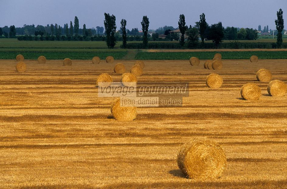 Europe/Italie/Emilie-Romagne/Argelato : Moisson dans la campagne émilienne