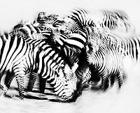 """The """"Migration"""" didn't really make an impact until we saw all of the massive herds of zebras gathering at watering holes."""