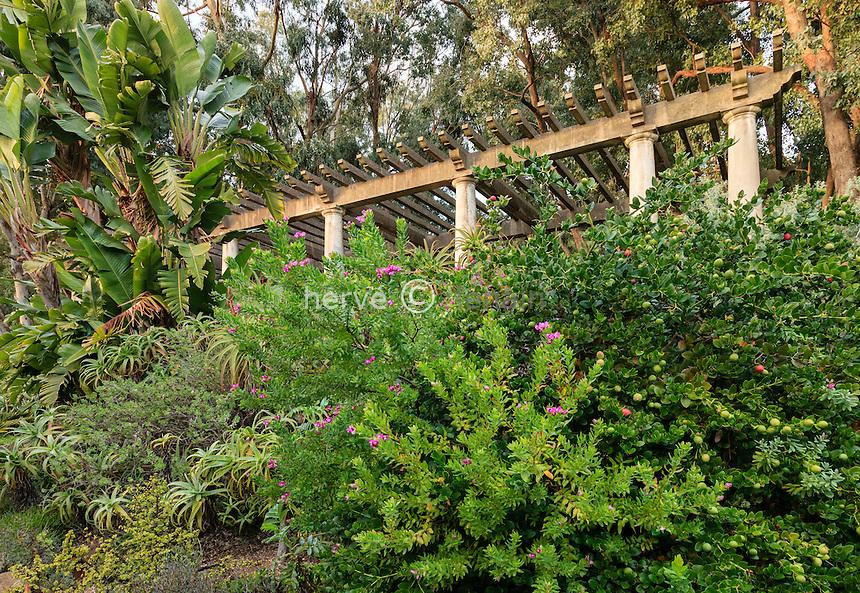 Domaine du Rayol en novembre : la pergola derrière un massif du jardin d'Afrique du sud