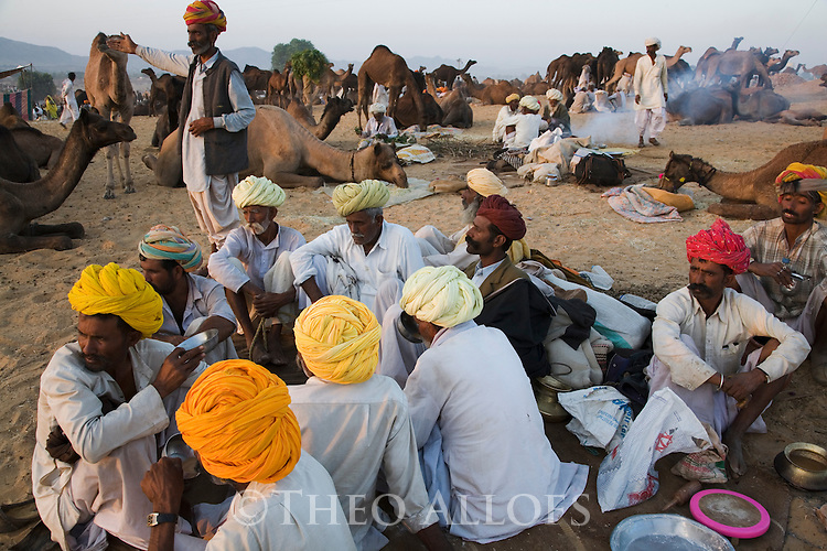 Scene at selling grounds of Pushkar camel fair at sunset; .The annual Pushkar camel fair is one of the main tourist attractions in India, Pushkar, Rajasthan, India