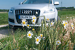 Audi Q7 at rest in Ingolstadt, Germany with daisies and wheat in foreground. June 2012.