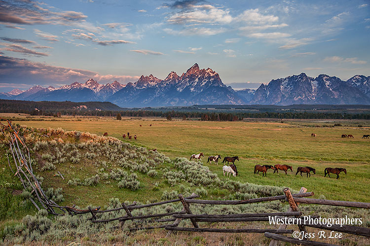 Teton horses,grand teton, Jackson Hole Wyoming