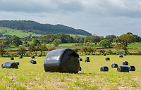 Silage bags in black plastic wrapping, Chipping, Preston, Lancashire.