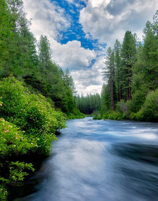 Metolius River with flowering bushes, Oregon