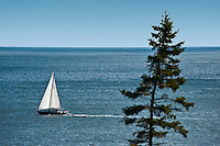 Sailboat along the Acadia coast, Maine, ME, USA