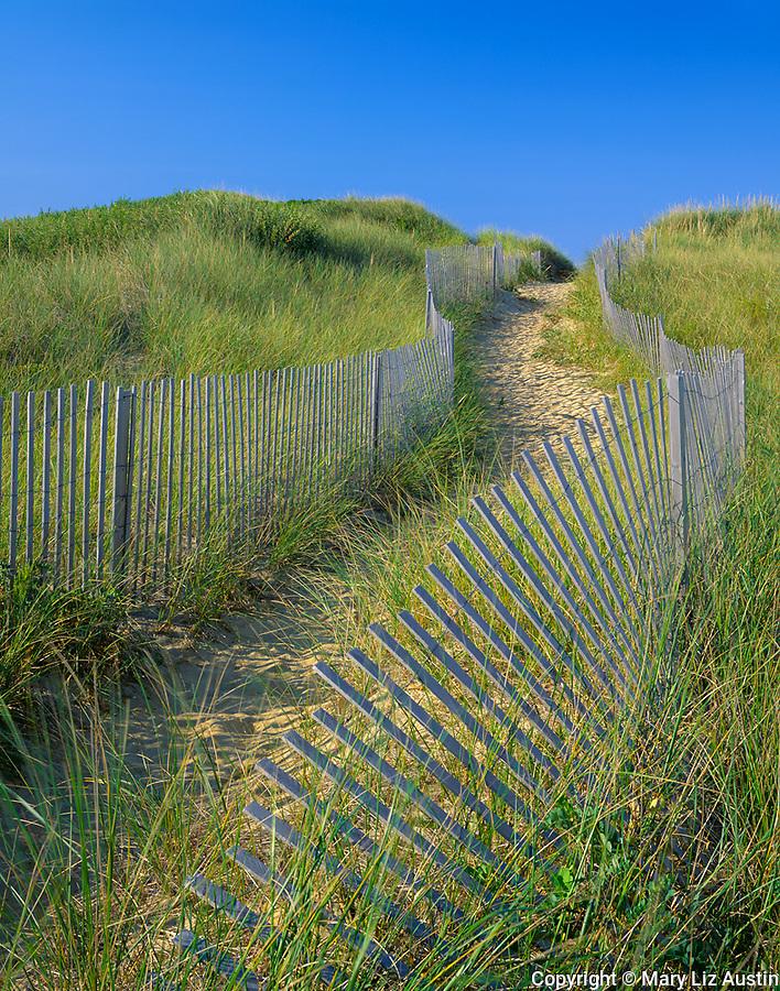 Cape Cod National Seashore, MA<br /> Wooden fences define a winding sand path through dunes on the Great Island Trail, Great Island near Wellfleet