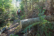 A freshly cut blowdown that has been removed with a saw along the Kate Sleeper Trail in the White Mountains, New Hampshire USA during the autumn months