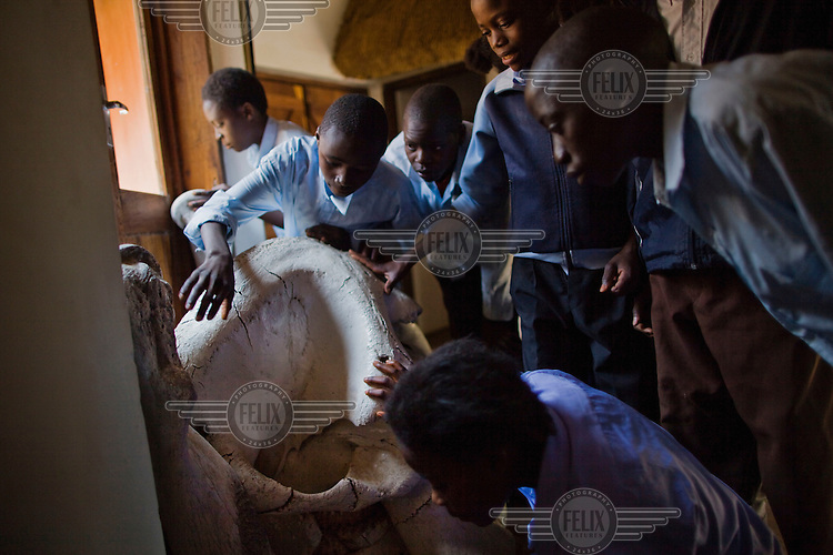 "Children from grades 4 and 5 at Chalilo school in Sereje district, handle an elephant skull on their first safari in Kasanka National Park. 14 year old Nickson Mwansa (second from left) says, ""I liked to learn the structure of the crocodile, and was also happy to see the size of the horns of an elephant; they were much bigger than I expected them to be."" Local schools and women's groups are regularly brought into Kasanka, which is unique in the country and unusual in Africa as it is privately managed and owned by a trust. People are able to see animals flourishing in land which was once free reign for poachers. Combined with anti-poaching scouts, the education programme is on the frontline of conservation methods in the park, showing local people wild animals in their natural habitat."