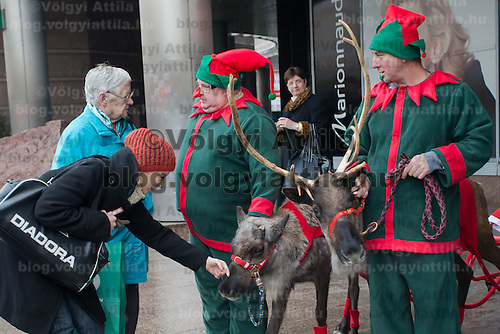Woman pets a reindeer in front of a mall promoting the charity of the Santa Factory as part of Hungary's Christmas celebrations in Budapest, Hungary on December 02, 2014. ATTILA VOLGYI