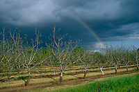 Orchard near Los Molinos<br />
