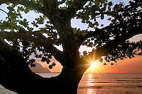 Sunset in Hanalei Bay with mangrove tree. Kauai, Hawaii