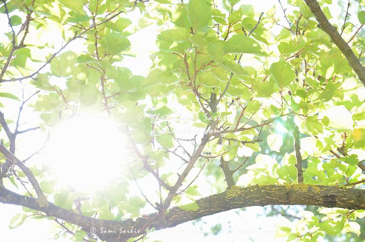 Sunlight through leaves in summer