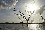 Dead trees rising from the waters of the Brokopondo reservoir in the interior of Suriname.  The man-made lake was hastily created by flooding a vast acreage of jungle without any prior logging and evacuation of animals and is reputed to be polluted by mercury from unregulated gold mining..