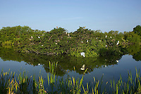 Venice Rookery, Florida