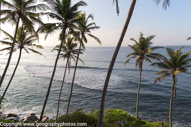Tropical coastal scenery of palm trees on a hillside by blue ocean, Mirissa, Sri Lanka, Asia