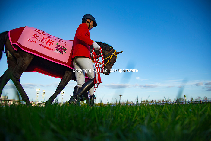 KYOTO,JAPAN-NOVEMBER 12: Mozu Katchan,ridden by Mirco Demuro, after winning the Queen Elizabeth ll Cup at Kyoto Racecourse on Nobember 12,2017 in Kyoto,Kyoto,Japan (Photo by Kaz Ishida/Eclipse Sportswire/Getty Images)