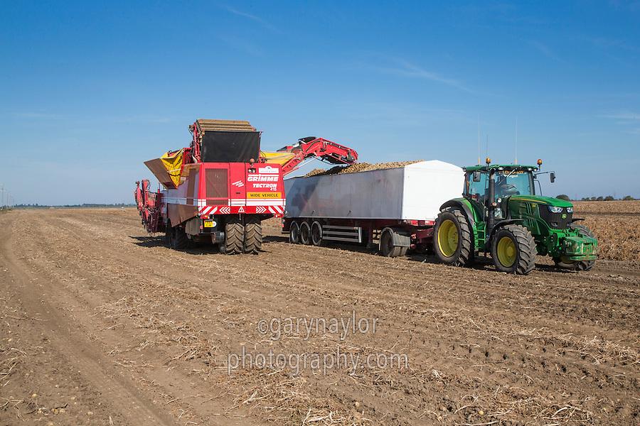 Grimme Tectron 415 harvester loading Ramos potatoes into a lorry bulker - September, Cambridgeshire