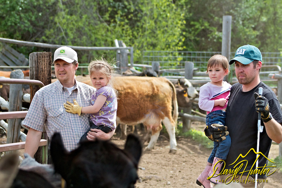 Cattle Ranching is a family affair, two brothers carry their daughters as they drive cattle through holding pens so they can be vaccinated.  Cattle drives and brandings are usually attended by three or more generations who all pitch in, or as in this case, observe from vantage points both high and low.  Lundquist Branding, Swan Valley Idaho