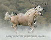 Bob, ANIMALS, collage, horses, photos(GBLA633,#A#) Pferde, caballos