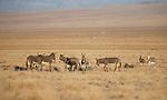 Nevada Creatures