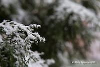 First Snow-2012