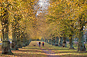 19/10/14<br /> <br /> Jane and Nigel Stock and their dog Holly marvel at an autumn scene of yellow Lime trees that may look very different tomorrow after forecast storms are due to rip leaves branches and possibly fell the mature trees  along Lime Tree Avenue at Clumber Park, the longest of its kind in Europe, near Worksop, Nottinghamshire. Planted in 1840, it is two miles long with 1,296 common limes.<br /> <br /> In 1906 the trees were suffering from insect attack. To counter this a black grease bands was painted round the tree trunks to trap the insects, 100 years on the black bands are still visible.<br /> <br /> All Rights Reserved - F Stop Press.  www.fstoppress.com. Tel: +44 (0)1335 300098
