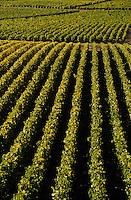 Europe/France/89/Yonne/AOC Chablis: Le vignoble à Chablis