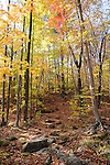 Hiking Trail during Fall Season in Hancock, New Hampshire USA